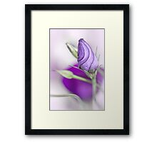 The new born Princess.... Framed Print