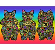 Three Wise Lucky Black Cats  Photographic Print