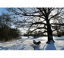 Snowy Silhouette Photographic Print