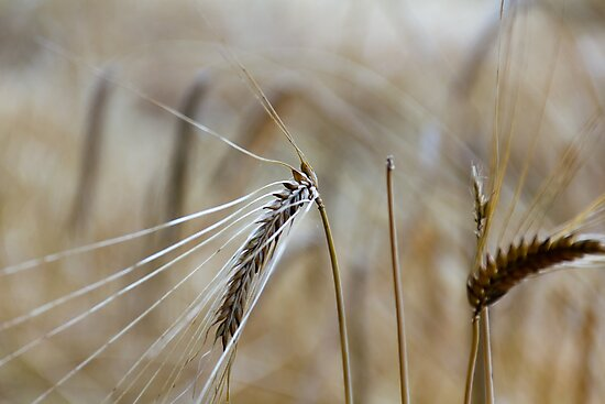 Harvest Time 6 by stay-focussed