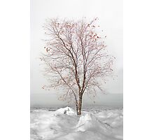 Fire n Ice (refuse to yield) Photographic Print