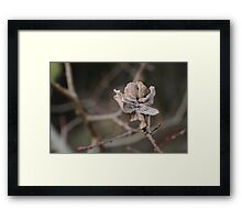 Willow Cabbage Gall, Landscape Framed Print