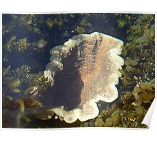 Life in a Rockpool... Poster