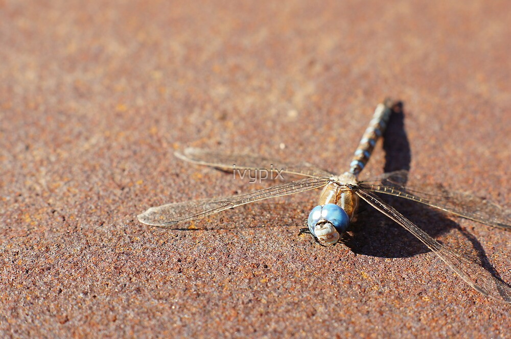 Dragonfly on Rust by ivypix