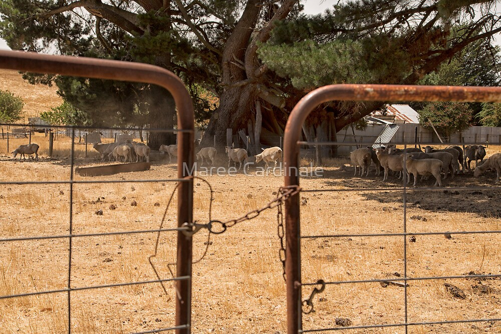 I love a sunburnt country... by Maree Cardinale