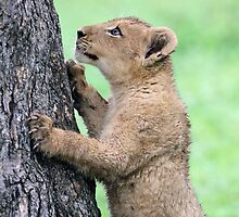 I think i can climb this tree!! by jozi1
