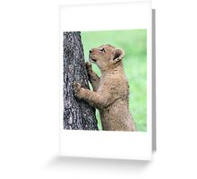 I think i can climb this tree!! Greeting Card