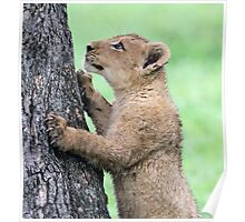 I think i can climb this tree!! Poster