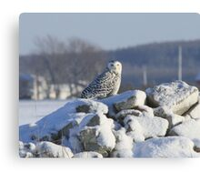 Upon her snowy throne Canvas Print