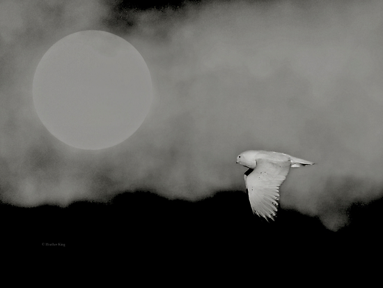 Moonlit migrant by Heather King