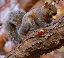 My Friendly Happy Hungry Dancing Squirrel ©  by © Hany G. Jadaa © Prince John Photography
