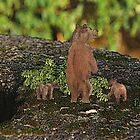 Three Bears by felissimha
