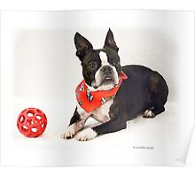The Dog with the Red Ball Poster