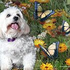 Sunny Chasing Butterflies by starlitestudio