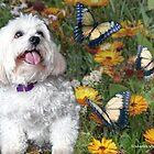 Sunny Chasing Butterflies by starlitestudio