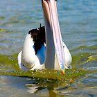 Pelican  by reflectyours