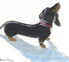 Dachshund Shadow by dvampyrelestat