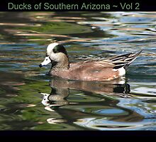 Ducks of Southern Arizona~ Vol 2  by Kimberly Chadwick