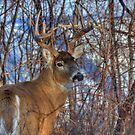 Nice looking 5 Pointer by JamesA1