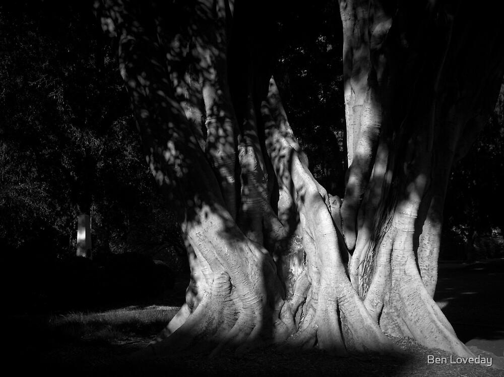 Scary Tree- Morton Bay Fig, Adelaide Botanic Gardens by Ben Loveday