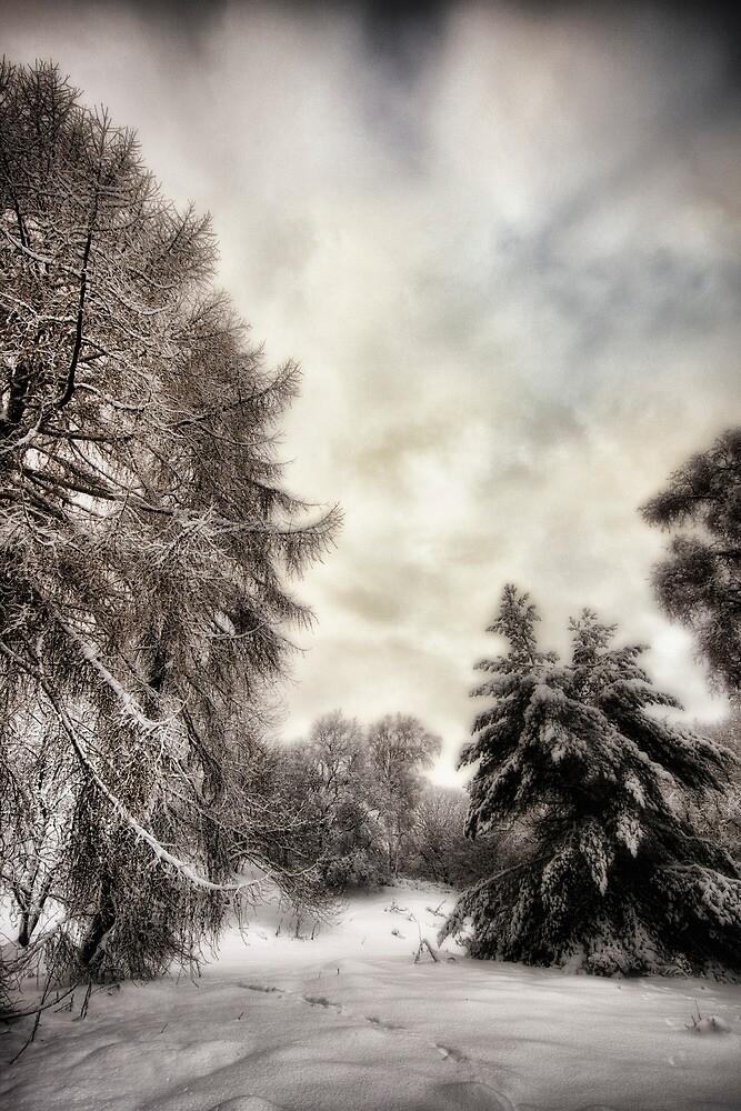 Snowy Woodland Walk by fraser68