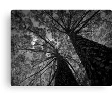 Scary Tree- Pine, Adelaide Botanic Park Canvas Print