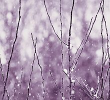 Winter by Anne Staub