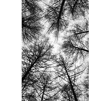 Vertical Fractal Trees Photographic Print