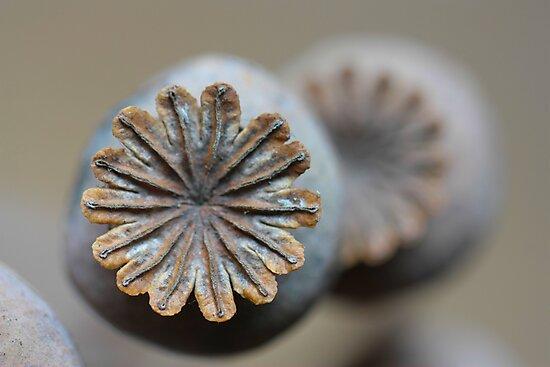 Seedy Bubbles by yvesrossetti