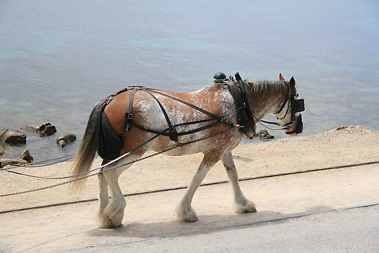 Draught Horse by Stephen Mitchell