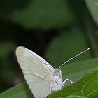 White Moth by Val Dunn
