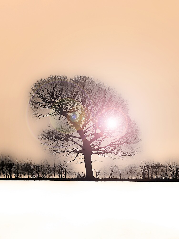 Winter Sunlight by DavidWHughes