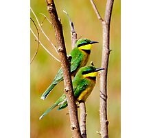 Cinnamon Chested Bee Eater Photographic Print