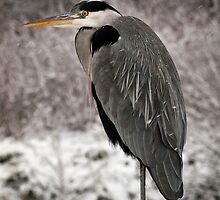 Fishing in the Snow by Paul Barnett