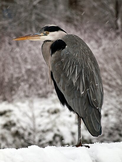 Fishing in the Snow by Paul Barnett