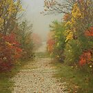 In Fall Its Glory by deb cole