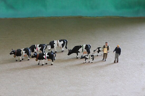 Bert can't believe he got such a great deal on ebay for this herd of Belted Galloways! by Susan Littlefield