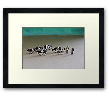 Bert can't believe he got such a great deal on ebay for this herd of Belted Galloways! Framed Print