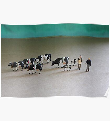 Bert can't believe he got such a great deal on ebay for this herd of Belted Galloways! Poster