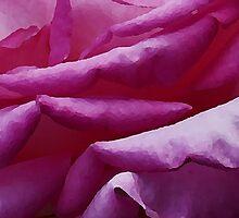 Rose by djknight