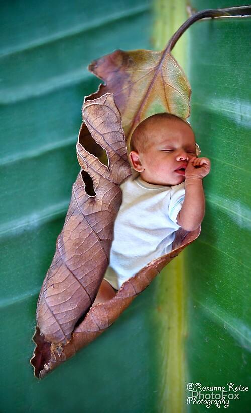Little Sleeper by PhotoFox