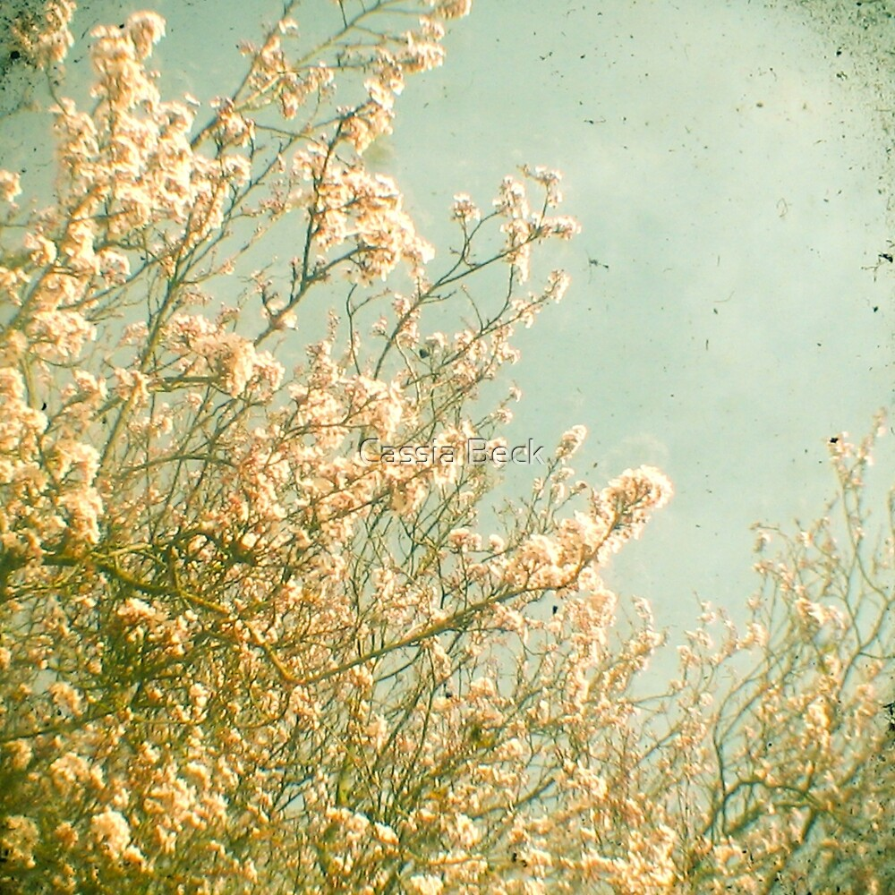 Spring by Cassia Beck