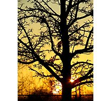 Sunrise silhouette Photographic Print