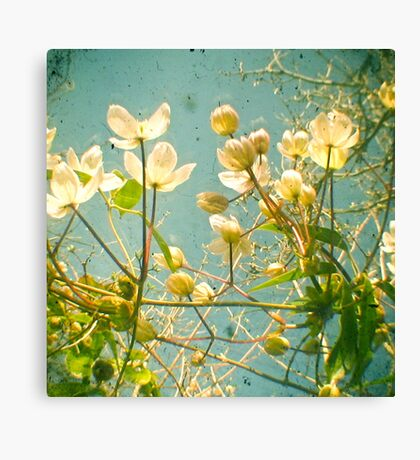 Look Up and You Will See Canvas Print