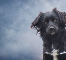 The Watchdog by Ursula Rodgers Photography