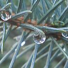 Winter droplets by becstrordinary
