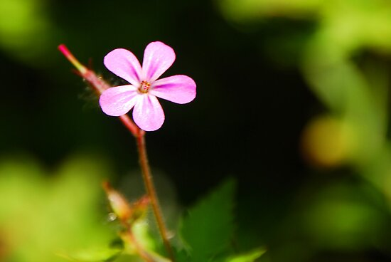 Tiny Pink Wild Flower by mcstory