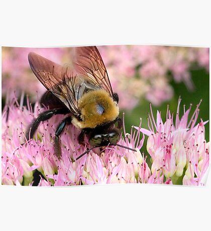 Stone Mountain Bumble Bee Poster