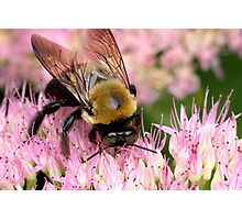 Stone Mountain Bumble Bee Photographic Print