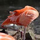 I Think This Bird is Broken by rosaliemcm